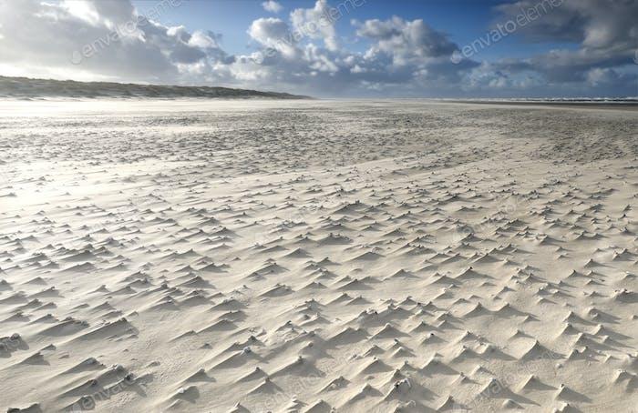 mollusk shells on windy sand beach