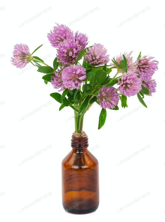 Medicine bottle with clover flowers