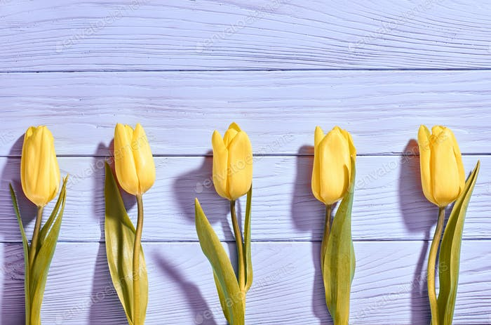 Mothers Day background.Tulips yellow on blue wood