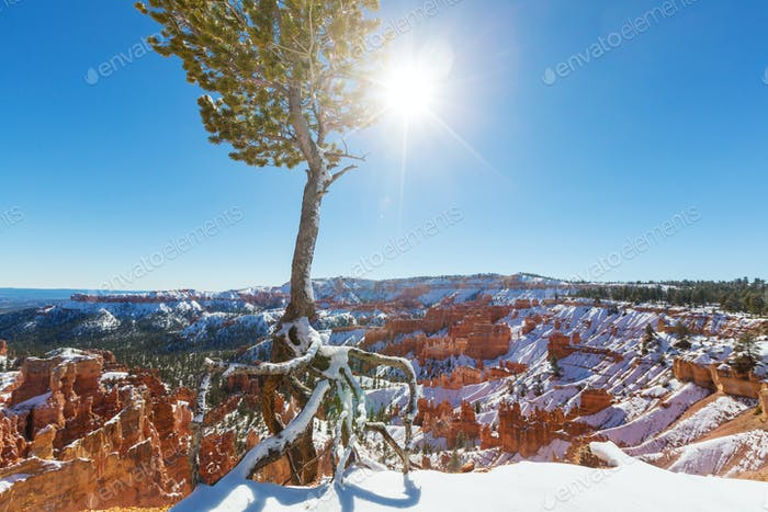 Winter Bryce