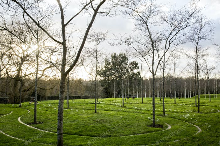 A garden in winter, young trees in grass with paths cut through the grass.