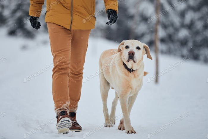 Obedient dog walking with his owner in snow