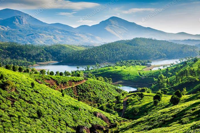 Tea plantations and river in hills. Kerala, India