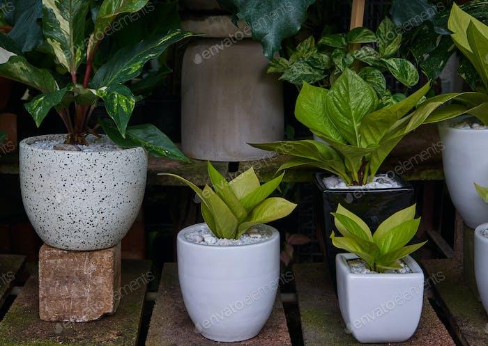 Die Pflanzen in den großen weißen Töpfen