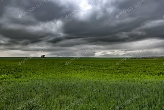 reen meadow