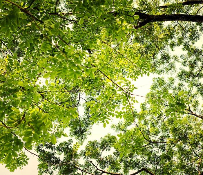 Grüne Baumspitzen