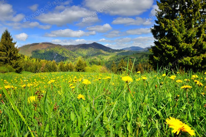 Scenic landscape with yellow dandelion flowers and mountains in