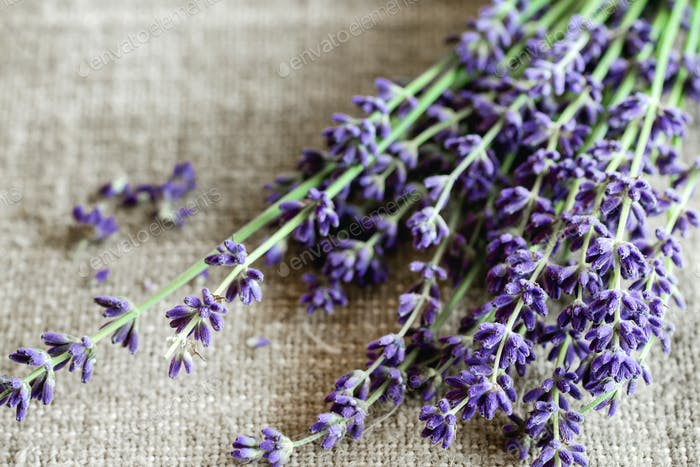 Bundle of lavender flowers