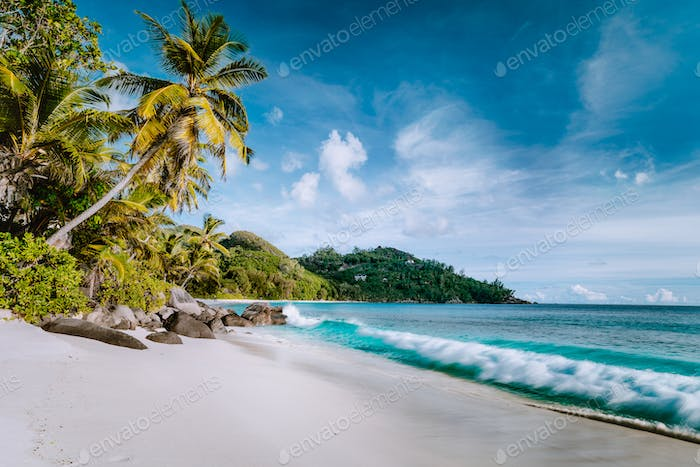 Beautiful Anse intendance, tropical beach. Ocean wave roll on sandy beach with coconut palm trees