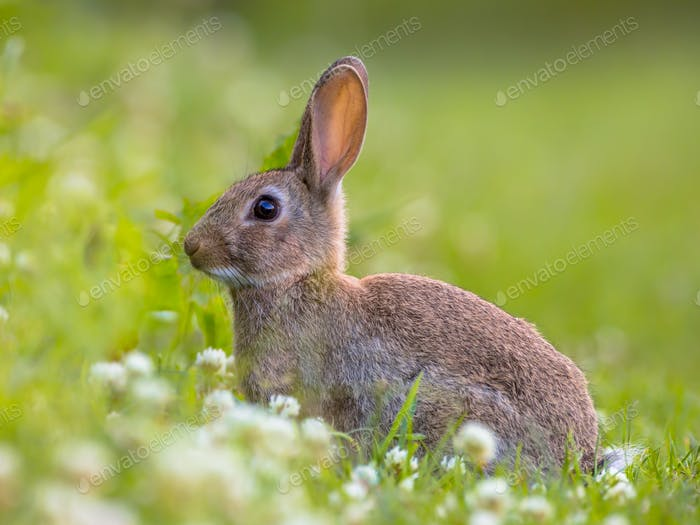 Wild rabbit green background