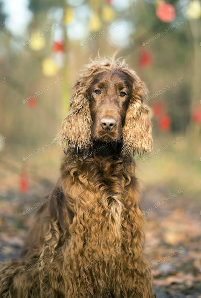 Cute dog portrait vertical