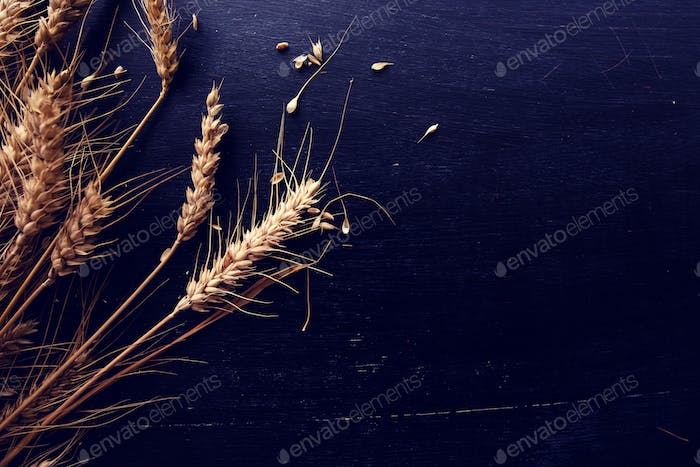 Ears of wheat and grains