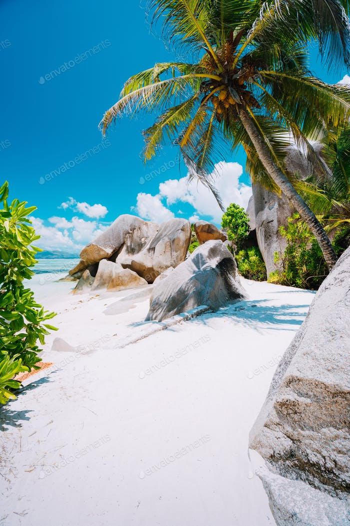 Sunny foot path trail with palm trees at Seychelles, La Digue, Anse Source d'Argent beach