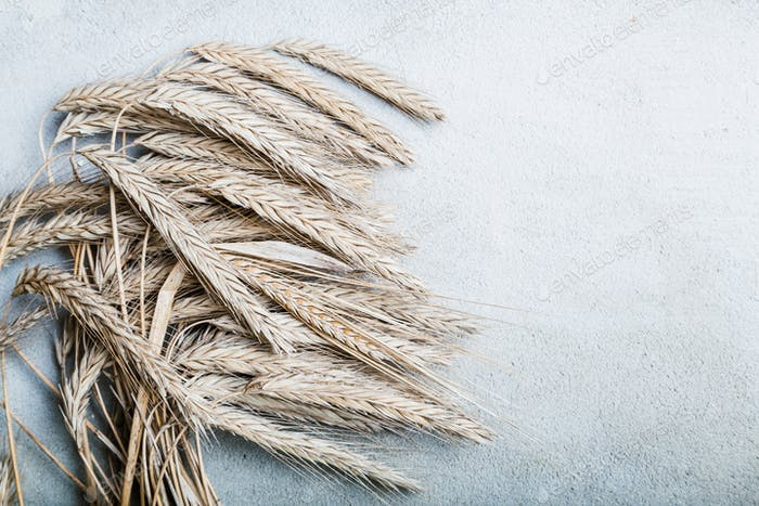 Ripe wheat on grey rustic background