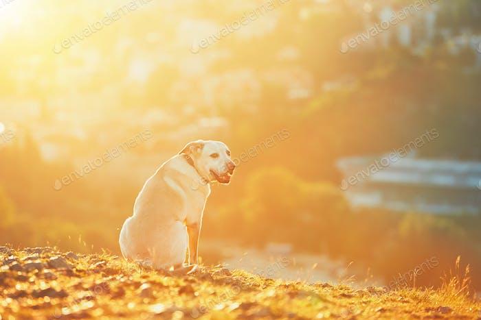 Happy dog at the sunrise