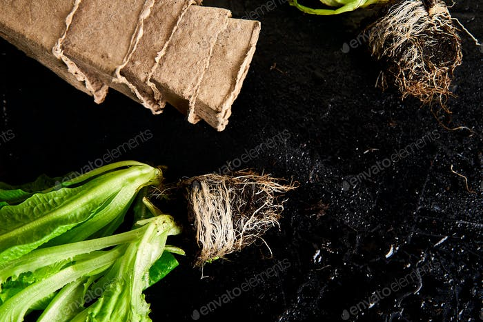 Flat lay of Gardening tools, basil, eco flowerpot, soil on black  background.