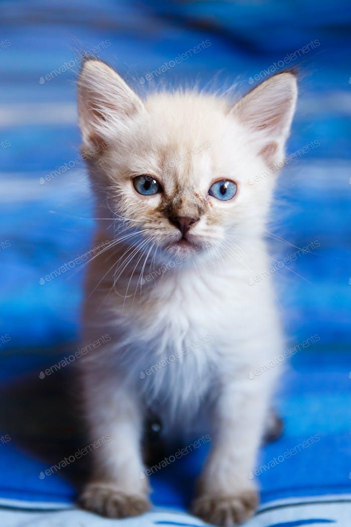 Gatito encantador mirando recto
