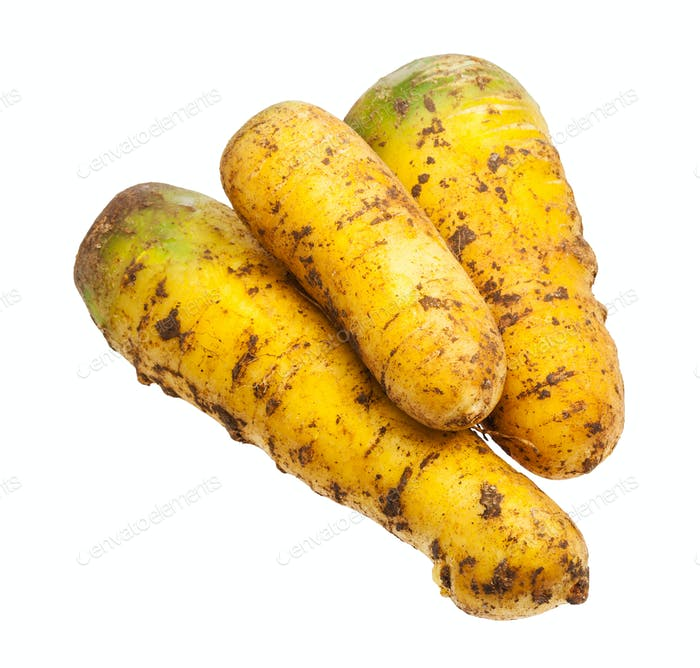 few organic uzbek yellow carrots isolated on white