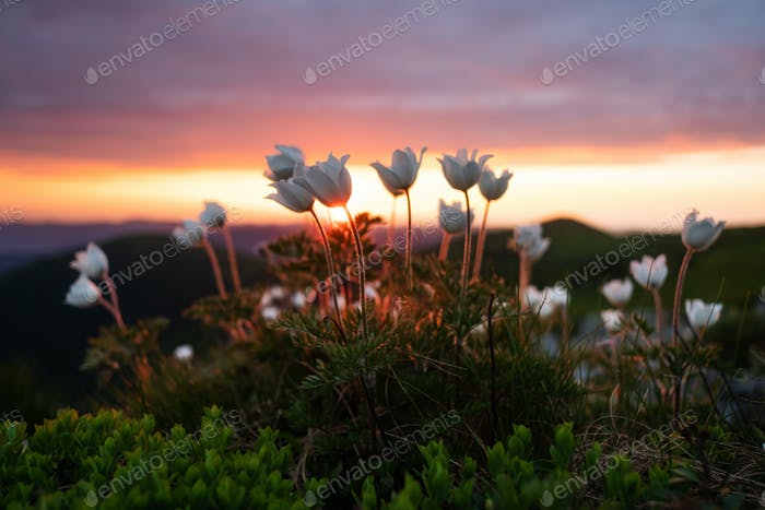 Amazing landscape with magic white flowers