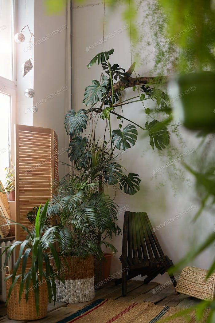 Beautiful plants in the room