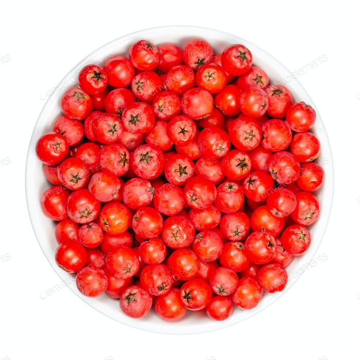 European rowan fruits in white bowl
