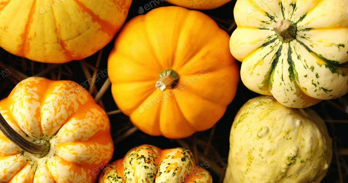 Heap of yellow pumpkins