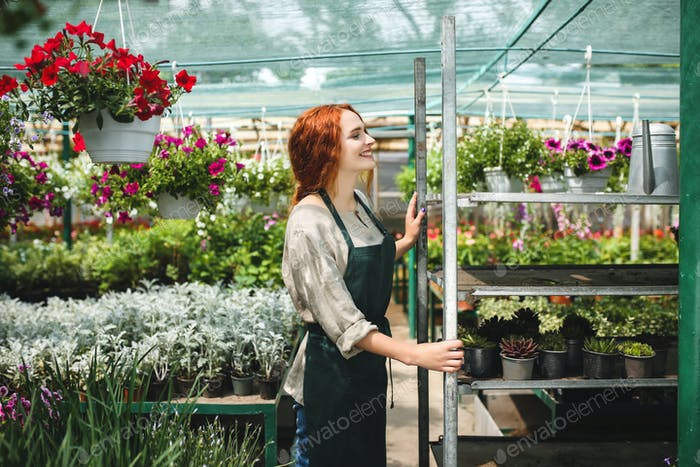 Cheerful florist in apron standing around beautiful flowers and happily working in big greenhouse