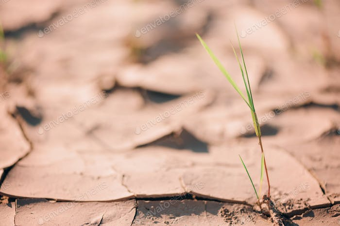 Dry land ground. Global warming problem. Desert concept. Cracked soil caused by dehydration. Water