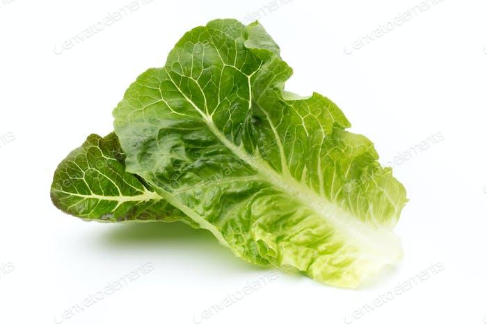 Oak Leaf lettuce isolated on white background.