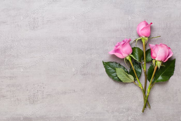 Frame made of pink rose on gray background.