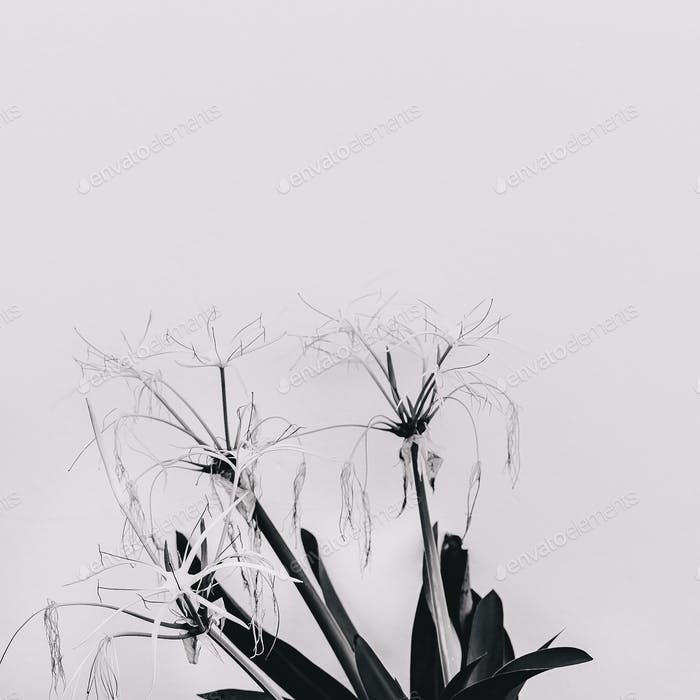 Modern art. Plant lovers. Flower. Black and white mood minimal c