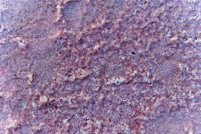 Close up of lake shore covered with pink salt