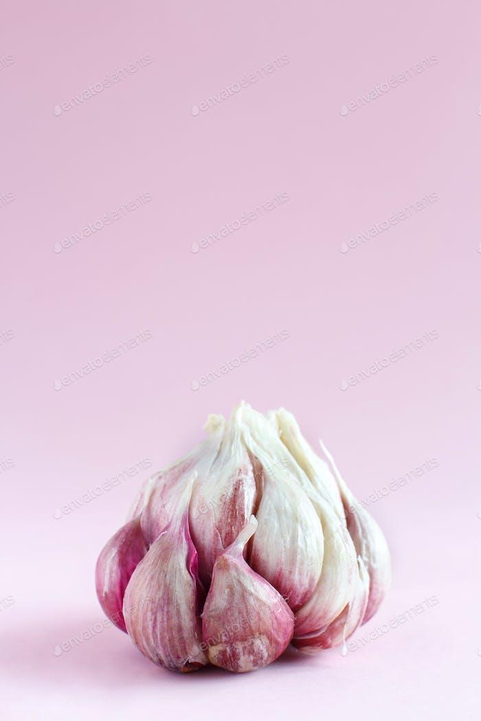 Fresh garlic on a light pink background