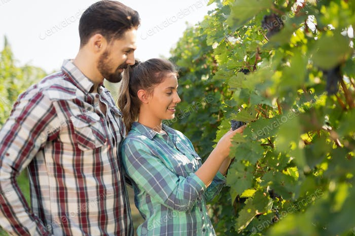 Happy woman in vineyard checking grapes