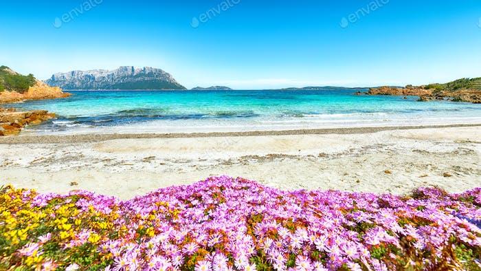 Fantastisches azurblaues Wasser mit Felsen und vielen Blumen am Doctors Beach