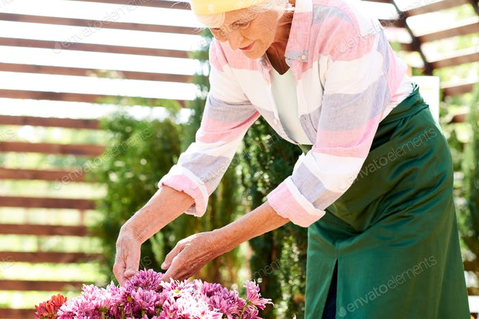 Senior Woman Growing Flowers