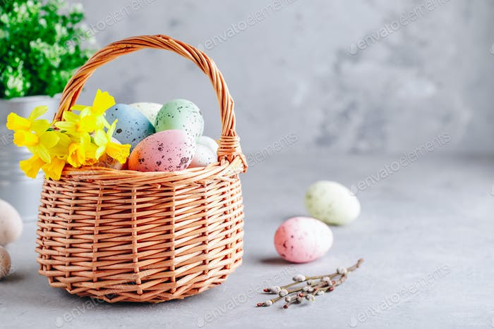 Colorful Easter eggs in the basket with daffodil  flowers on gray stone concrete background