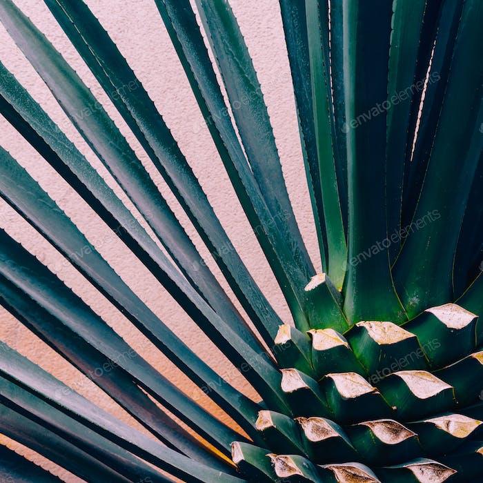 Plant on pink. Tropical design minimal fashion art  Love Green