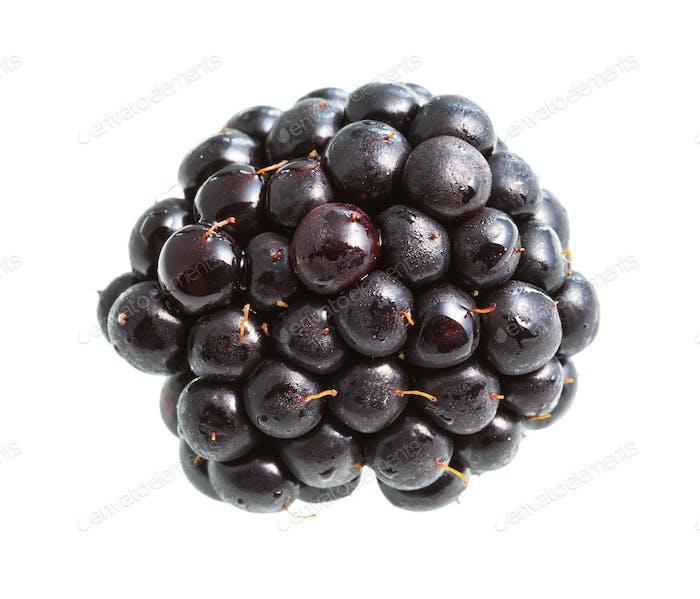 fresh blackberry isolated on white
