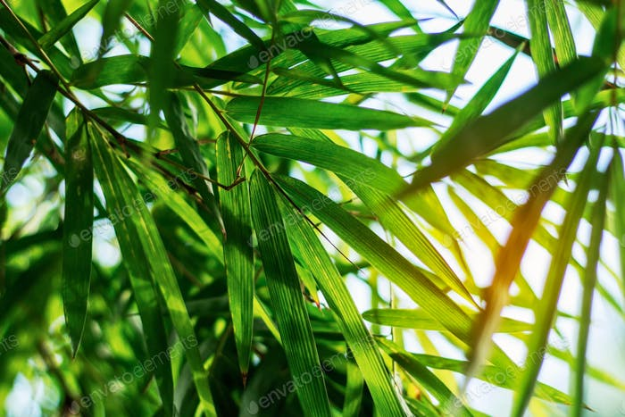 Bamboo leaves at sky