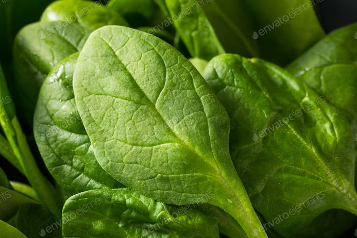 Raw Green Organic Spinach Leaves