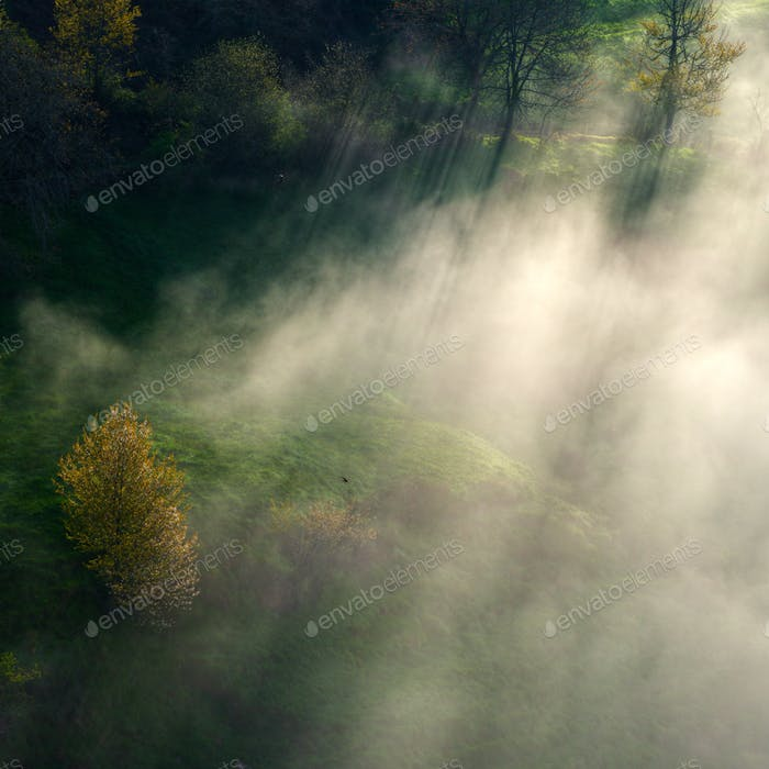 Mist tracer.