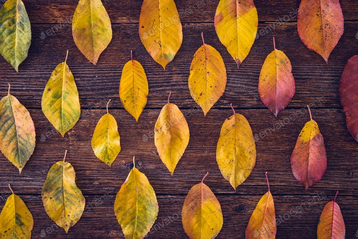 Autumn composition with colorful leaves