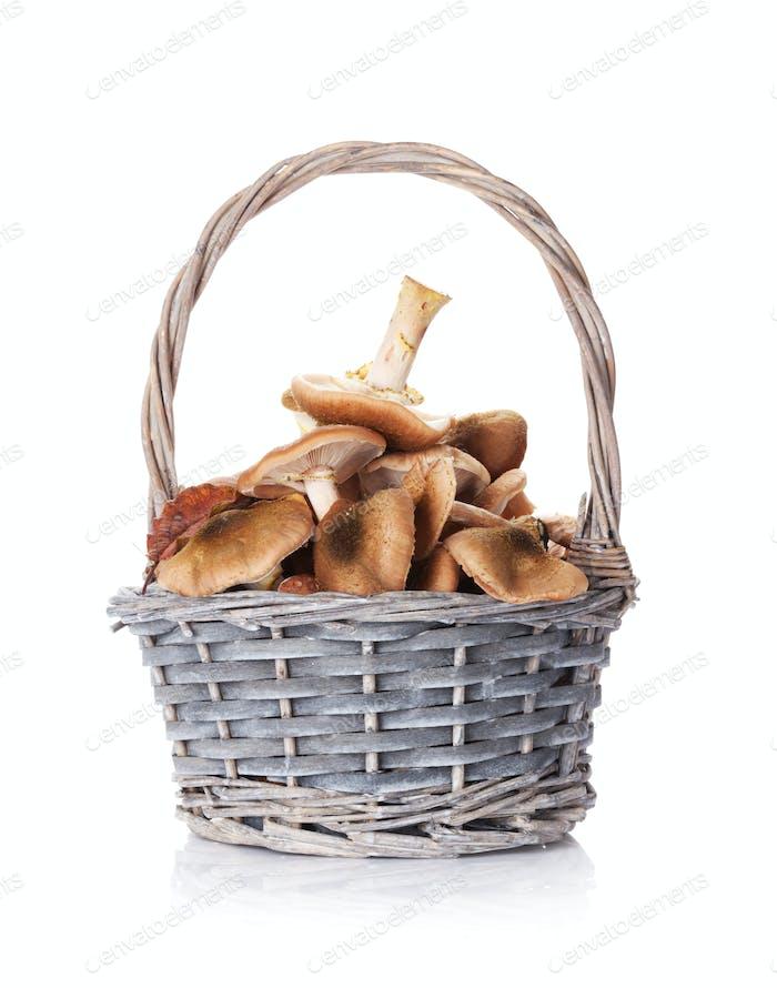 Autumn mushrooms basket