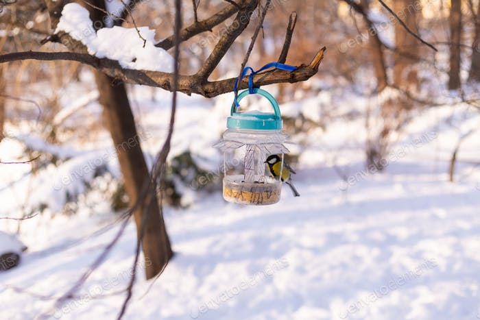 Birdhouse in a winter snowy park forest with a bird