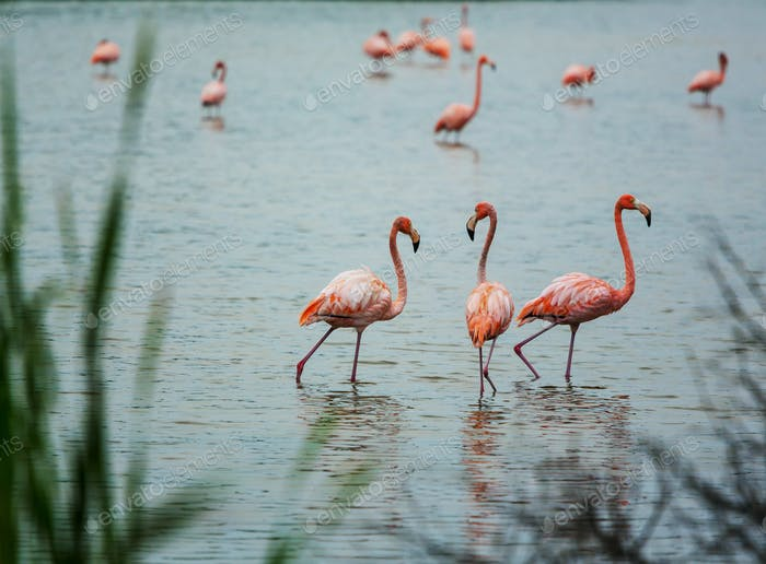 Flamingo in Mexico