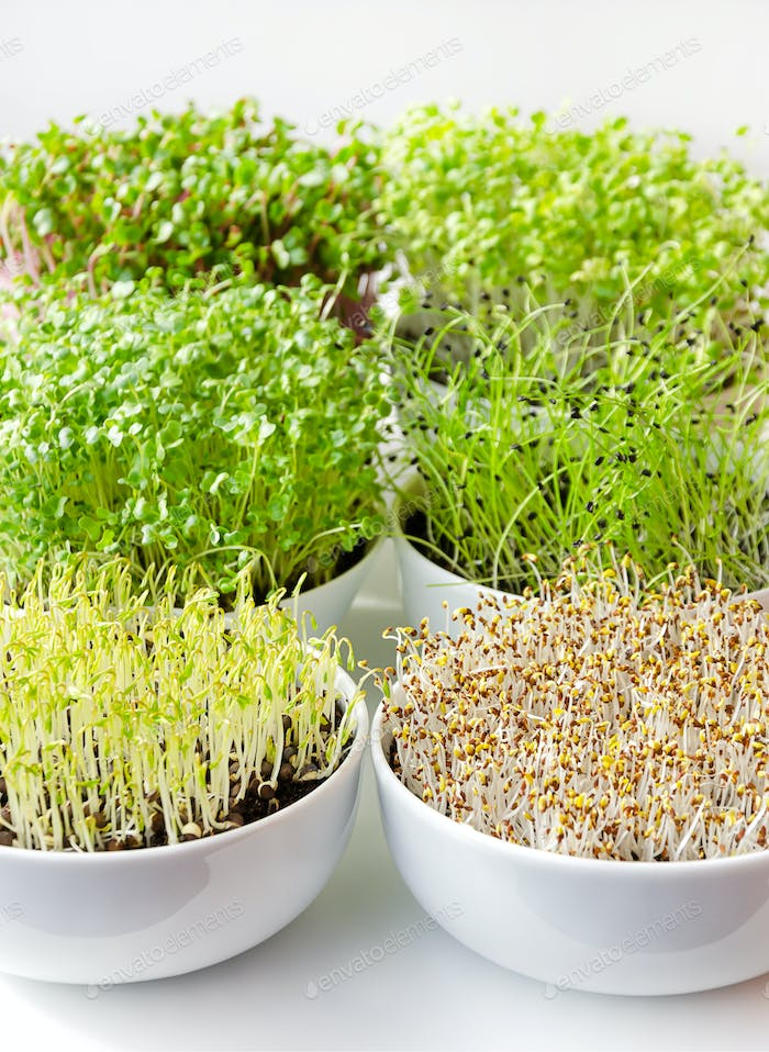 Microgreens in white bowls, vertical, closeup