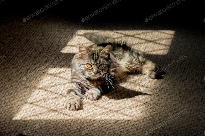 kitten in the shadows