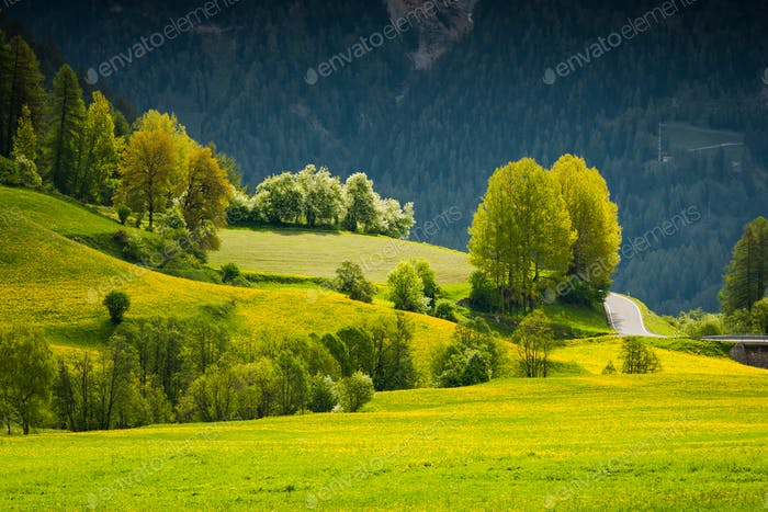 Vibrant green summer trees and flowering meadow in Switzerland A