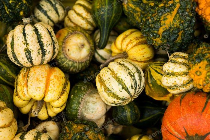 Diverse assortment of pumpkin